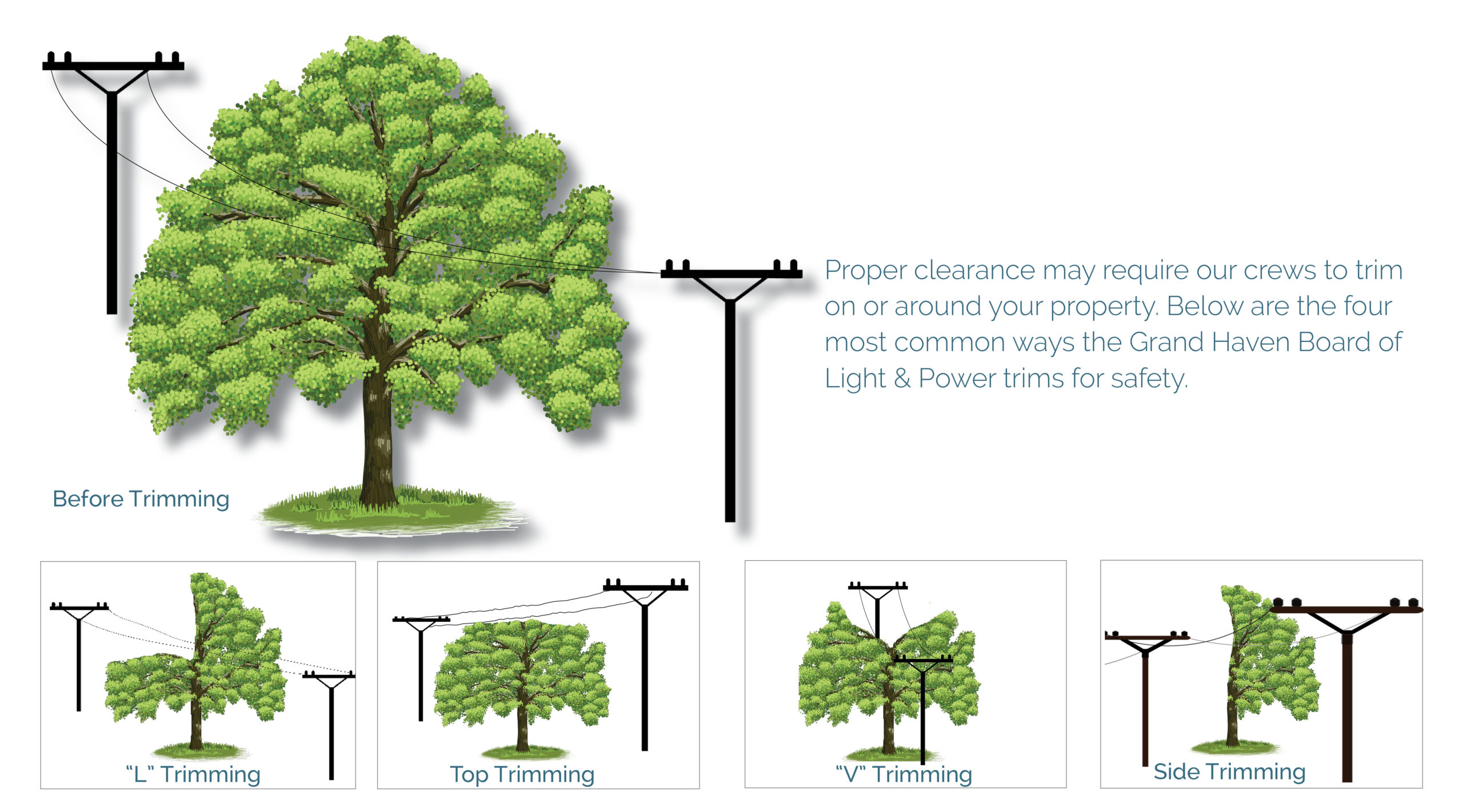 Web version of 4 common ways to trim trees